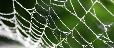 A Spider Web - Photo by MR+G