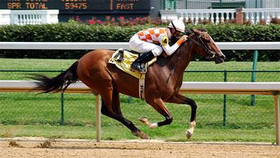 racehorse in mid-run