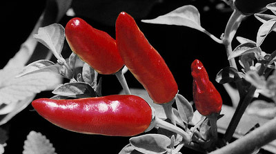 Emphasized red peppers